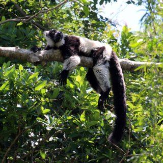 Monkeying around on Safari!
